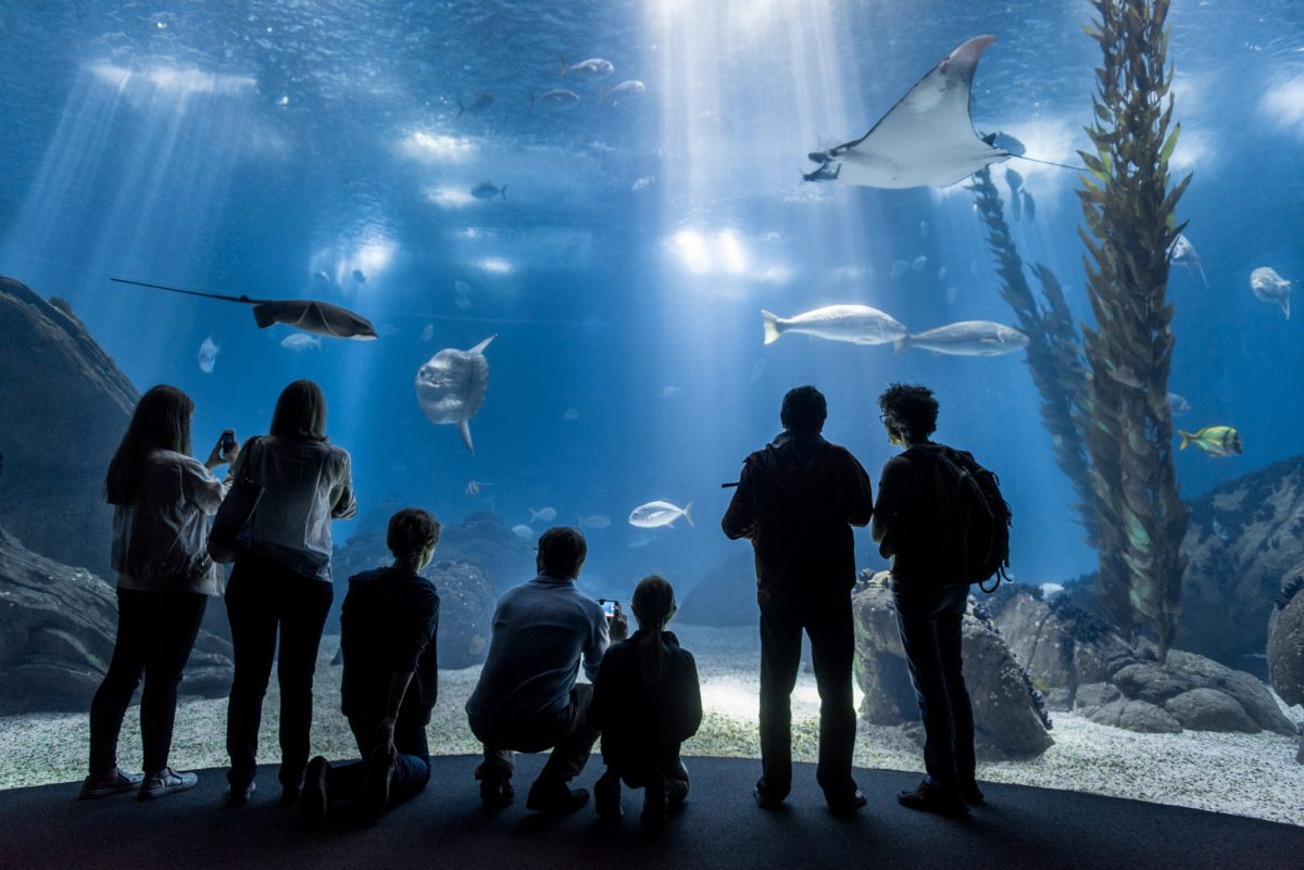 Photo of At the Oceanário, children and youth only pay €5 in July