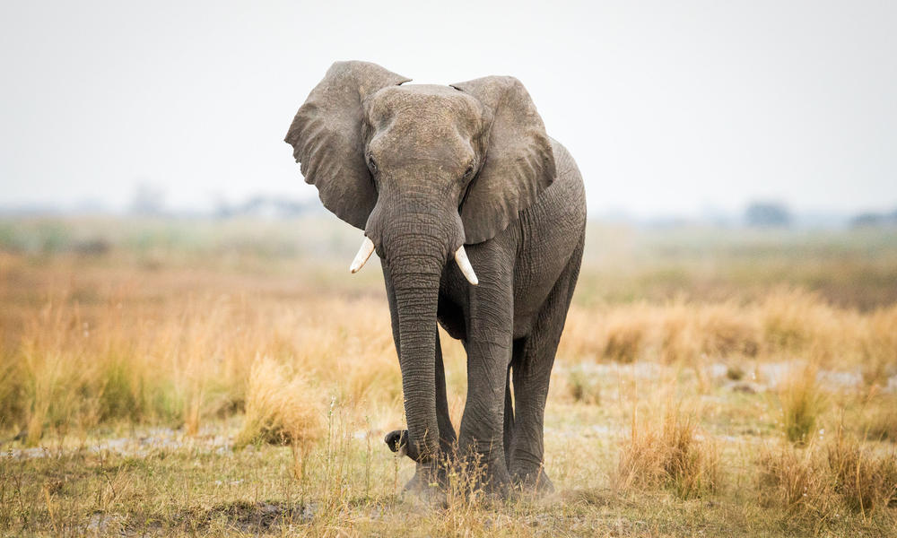 Photo of Mozambican authorities have training to combat elephant hunting