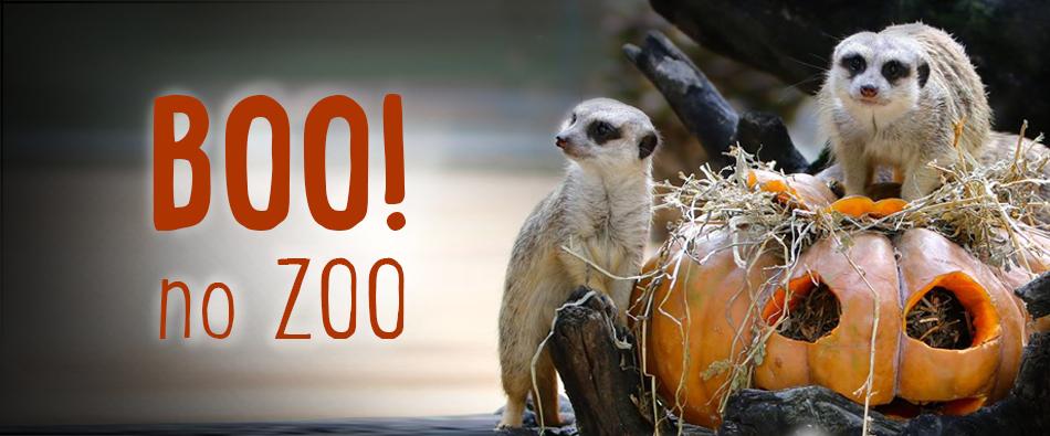 "Photo of Courageous?Zoo prepares Halloween ""frighteningly wild"""