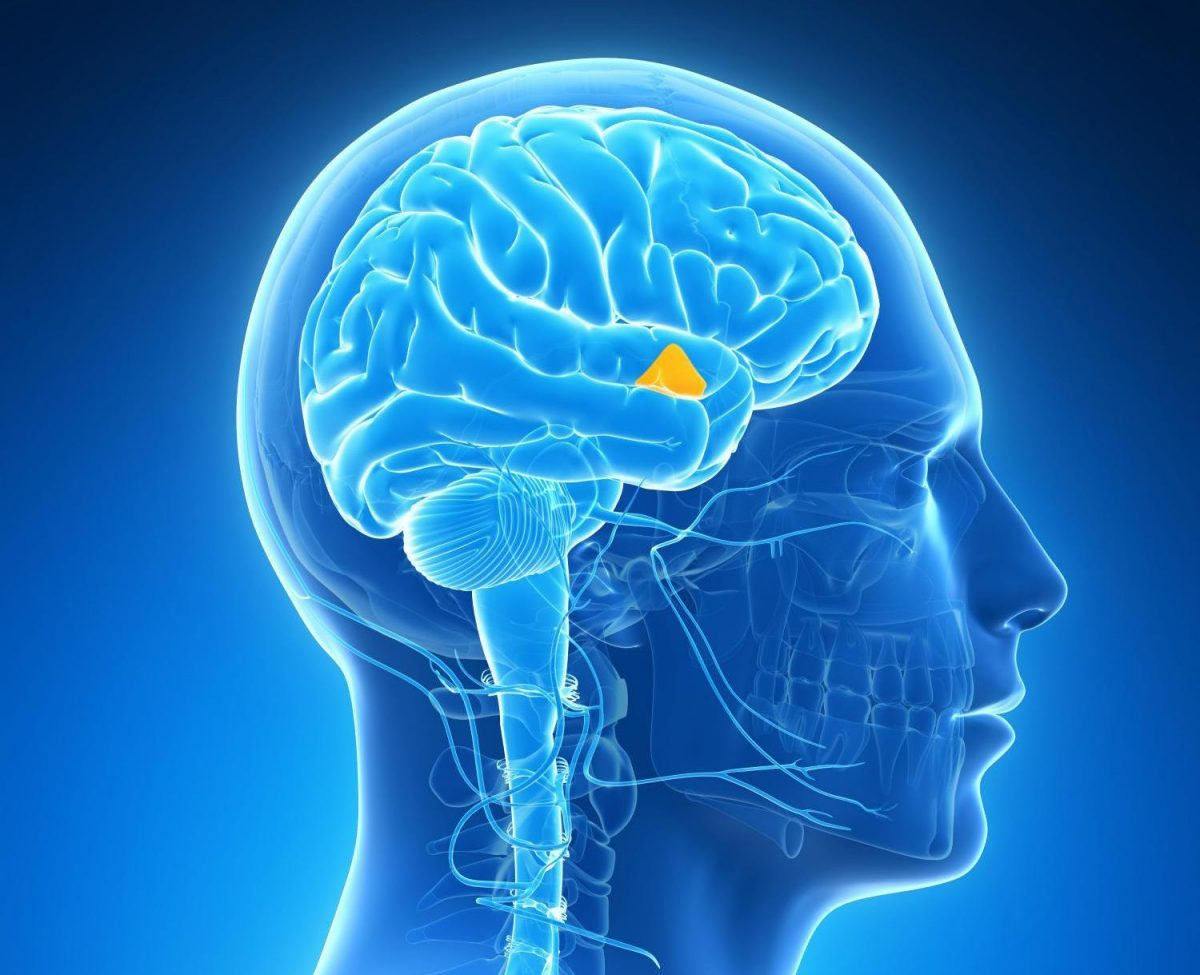 Photo of Discovery of the function of structures in the brain related to epilepsy