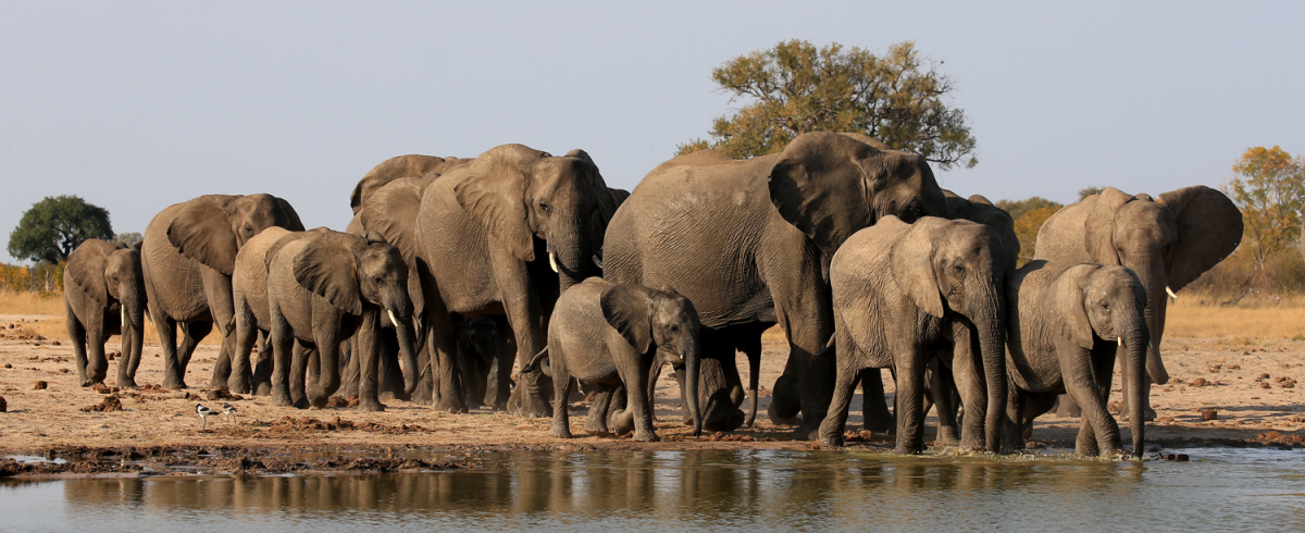 Photo of Botswana to give 500 elephants to Mozambique