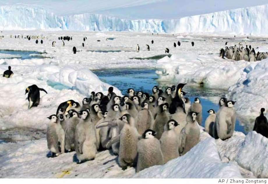 "Photo of Lisbon zoo warns of ""urgent"" need for protection of penguins"