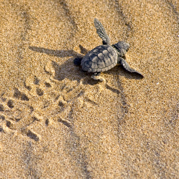 Photo of Unexplained environmentalists to increase turtle nests