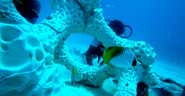 Photo of Porto team uses 3D printing to create reefs in the Atlantic