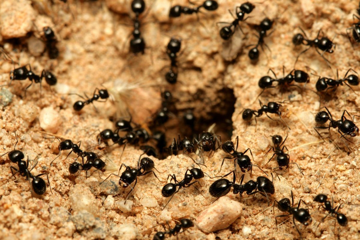 Photo of Pet ants? There and will be at Pet Festival