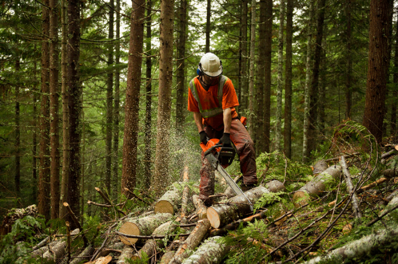 Photo of Government tries to attract young people to forestry professions