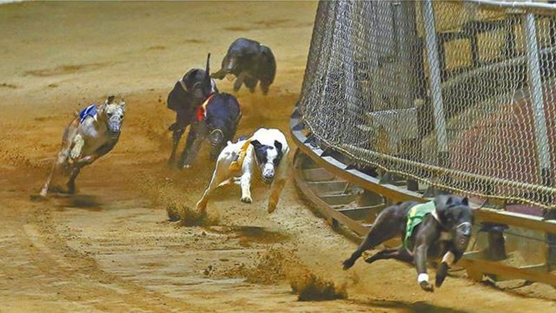 Photo of Latest greyhounds leave the canidrome of Macau