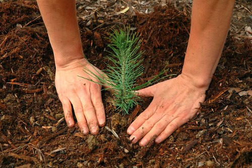Photo of Sacoor Brothers plant 10,000 trees in the Pinhal de Leiria