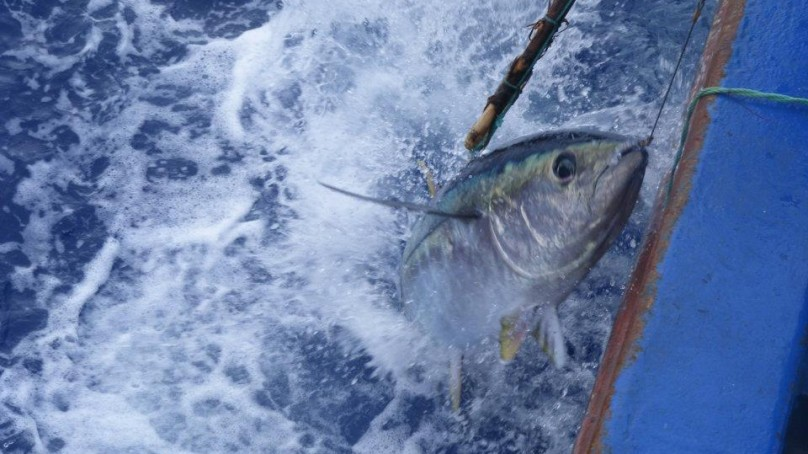 Photo of Fished in Madeira 404 kilos tuna