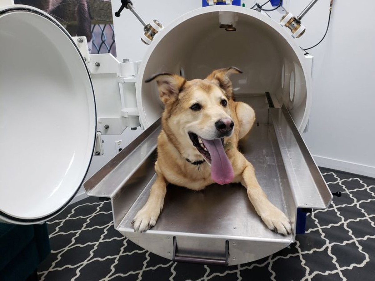 Photo of Inaugurated in Portugal the first Hyperbaric Animal Chamber