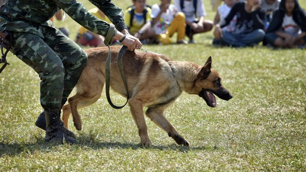 Photo of Navy dogs used in over a hundred actions
