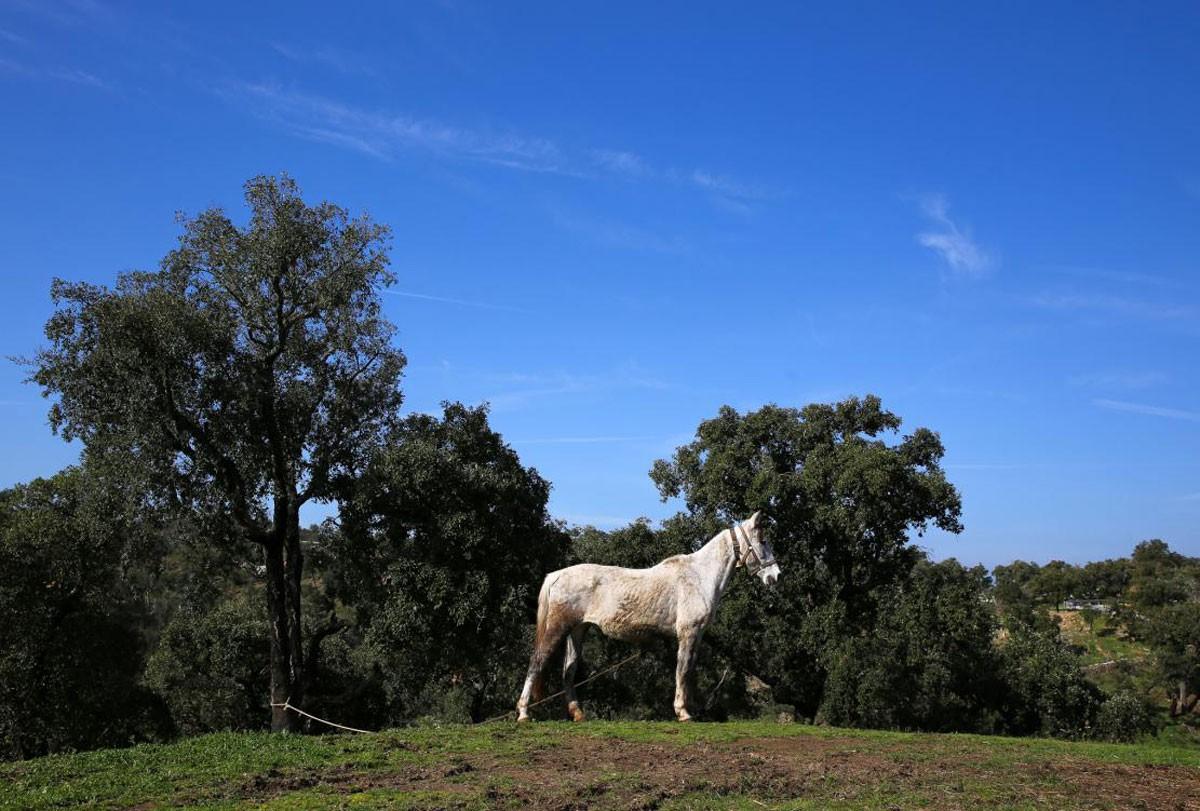 Photo of Serra do Caldeirão – Photo Gallery