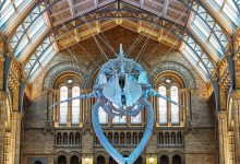 Photo of Visit the The Natural History Museum in London in virtual format