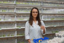 Photo of International team discovers new family of freshwater microalgae