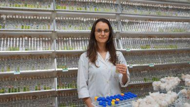 Photo of International team discovers new family of freshwater microalgae