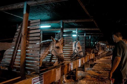 Horses Feira da Serra